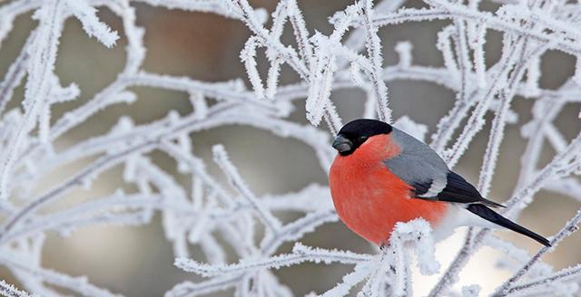 en-vinter-bild
