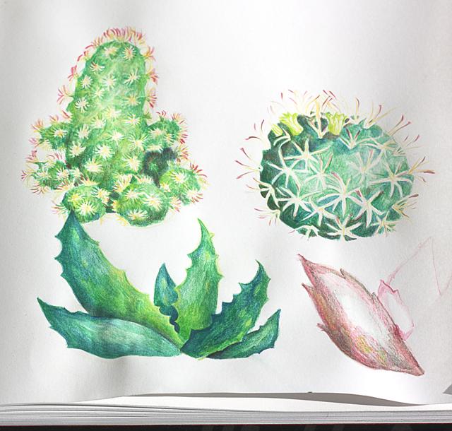 malar-kaktusar